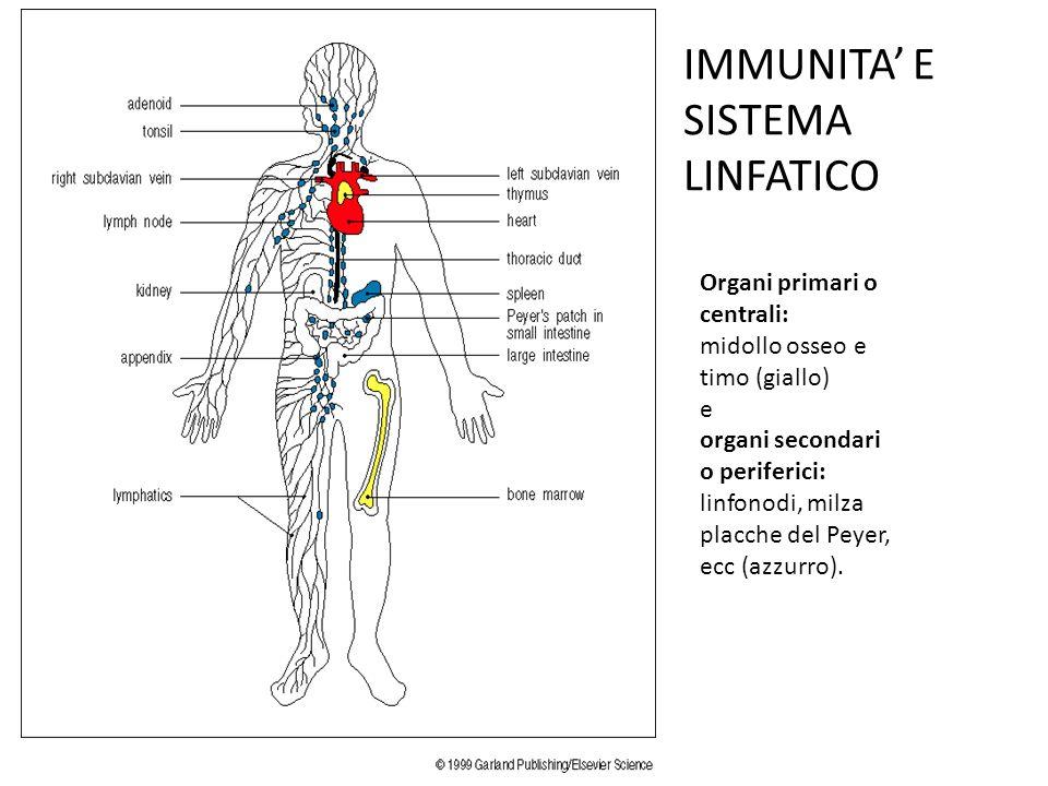 IMMUNITA' E SISTEMA LINFATICO