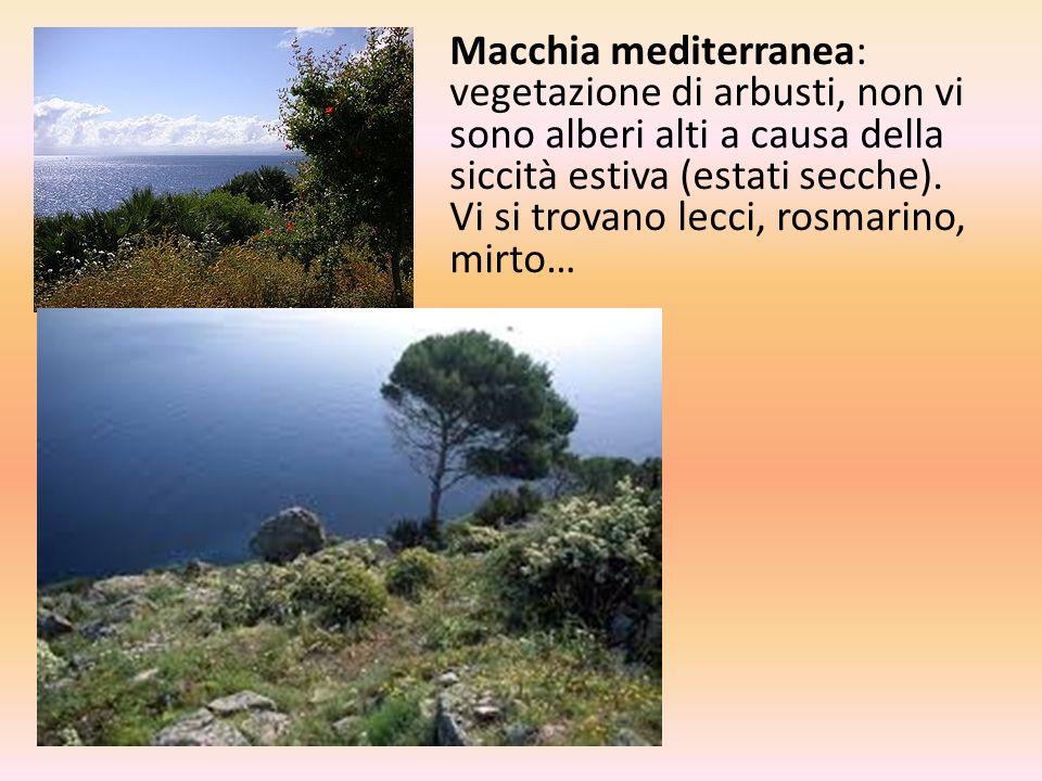 Macchia mediterranea: vegetazione di arbusti, non vi sono alberi alti a causa della siccità estiva (estati secche).