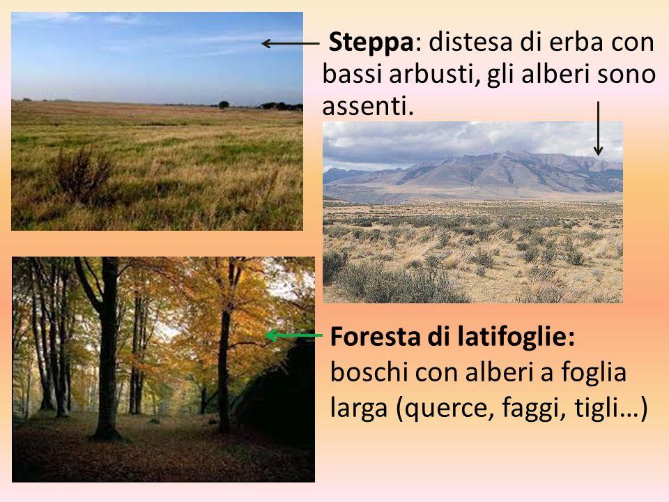 Steppa: distesa di erba con bassi arbusti, gli alberi sono assenti.