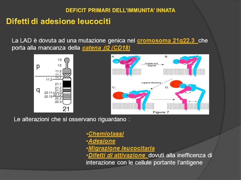 DEFICIT PRIMARI DELL'IMMUNITA' INNATA Difetti di adesione leucociti