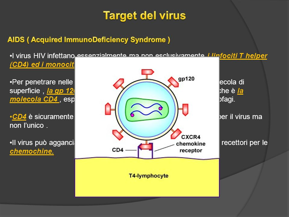 Target del virus AIDS ( Acquired ImmunoDeficiency Syndrome )