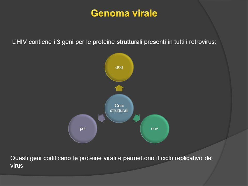 Genoma virale L'HIV contiene i 3 geni per le proteine strutturali presenti in tutti i retrovirus: Geni strutturali.
