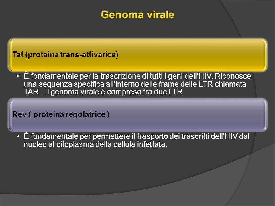 Genoma virale Tat (proteina trans-attivarice)