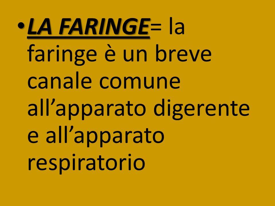 LA FARINGE= la faringe è un breve canale comune all'apparato digerente e all'apparato respiratorio