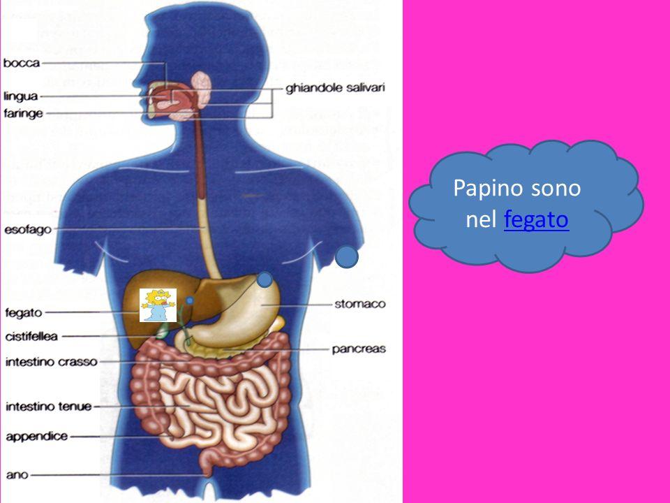 Papino sono nel fegato