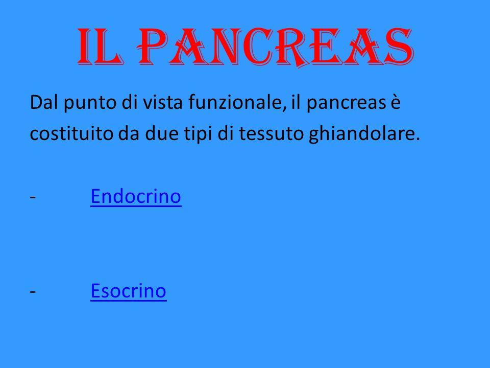 Il pancreas Dal punto di vista funzionale, il pancreas è costituito da due tipi di tessuto ghiandolare.