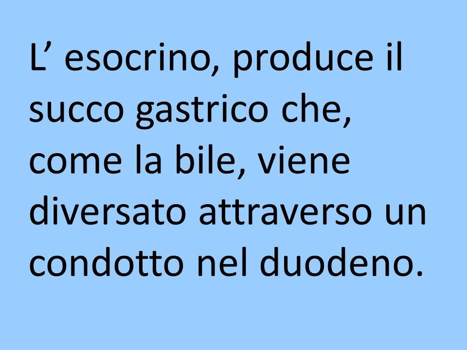 L' esocrino, produce il succo gastrico che, come la bile, viene diversato attraverso un condotto nel duodeno.