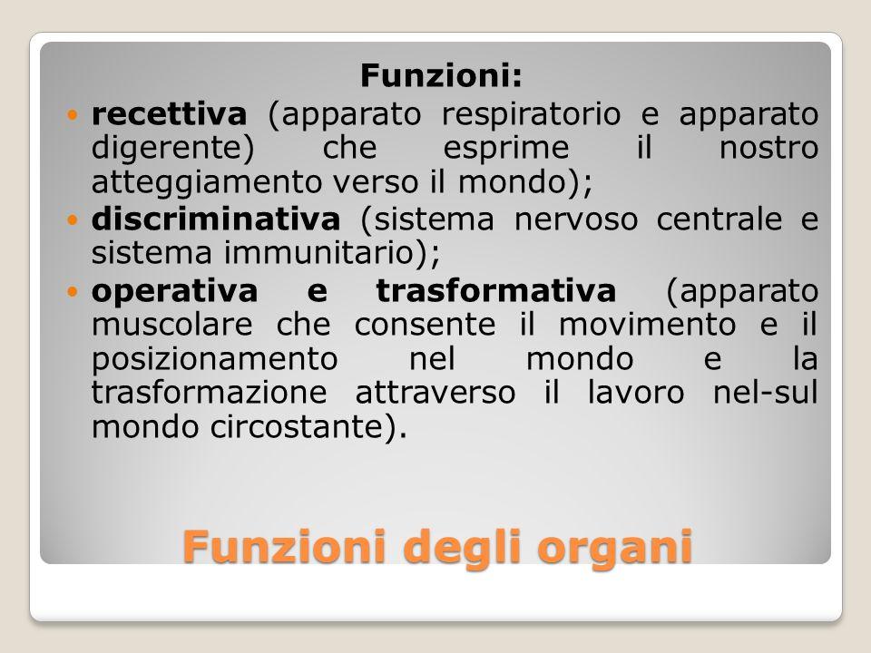 Funzioni degli organi Funzioni: