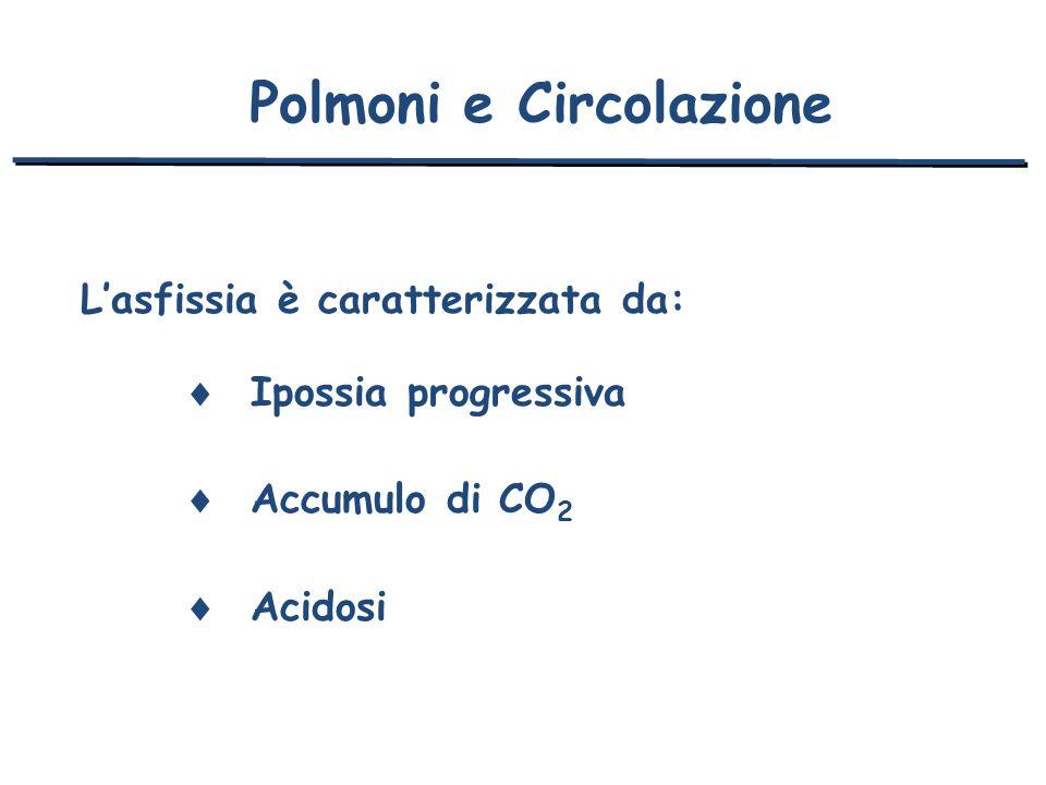 Polmoni e Circolazione