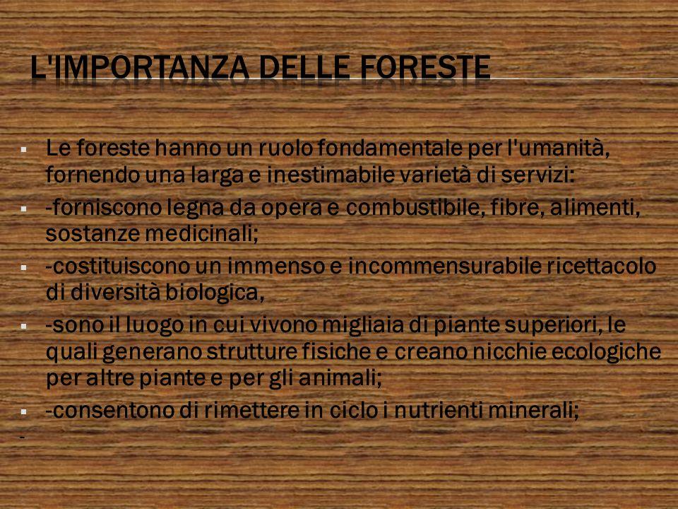 L importanza delle foreste