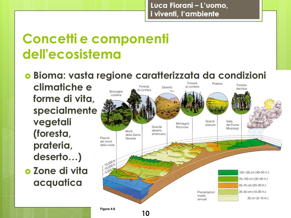 Concetti e componenti dell ecosistema