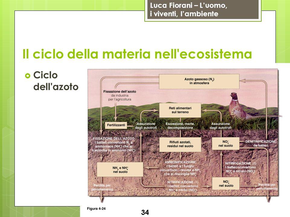 Il ciclo della materia nell ecosistema