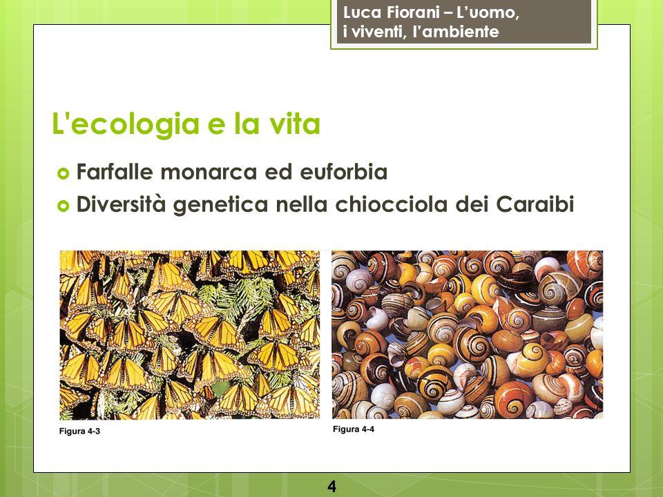 L ecologia e la vita Farfalle monarca ed euforbia