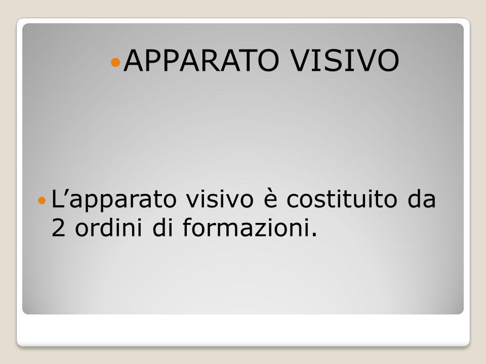 APPARATO VISIVO L'apparato visivo è costituito da 2 ordini di formazioni.