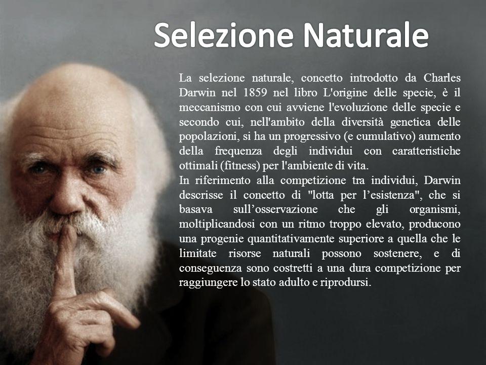 Selezione Naturale
