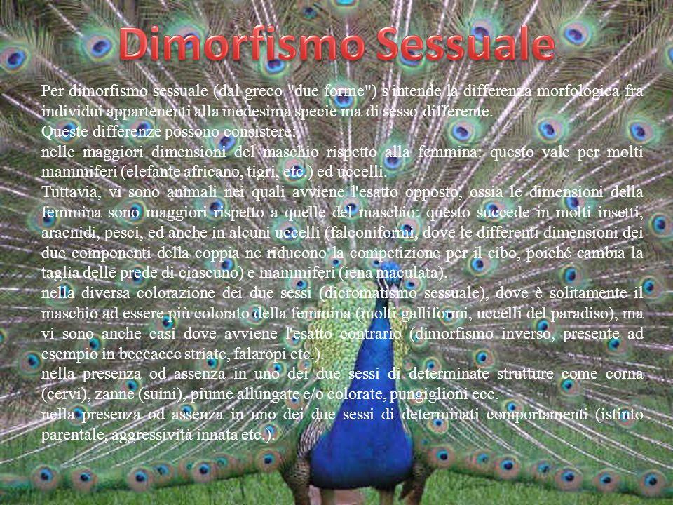 Dimorfismo Sessuale