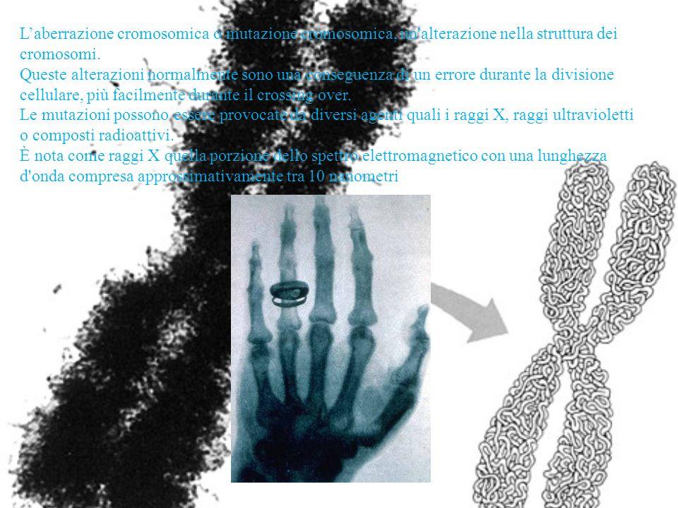 L'aberrazione cromosomica o mutazione cromosomica, un alterazione nella struttura dei cromosomi.