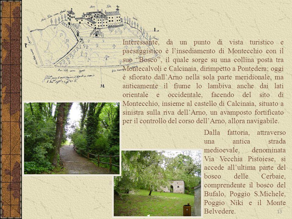 Interessante, da un punto di vista turistico e paesaggistico è l'insediamento di Montecchio con il suo Bosco , il quale sorge su una collina posta tra Montecalvoli e Calcinaia, dirimpetto a Pontedera; oggi è sfiorato dall'Arno nella sola parte meridionale, ma anticamente il fiume lo lambiva anche dai lati orientale e occidentale, facendo del sito di Montecchio, insieme al castello di Calcinaia, situato a sinistra sulla riva dell'Arno, un avamposto fortificato per il controllo del corso dell'Arno, allora navigabile.