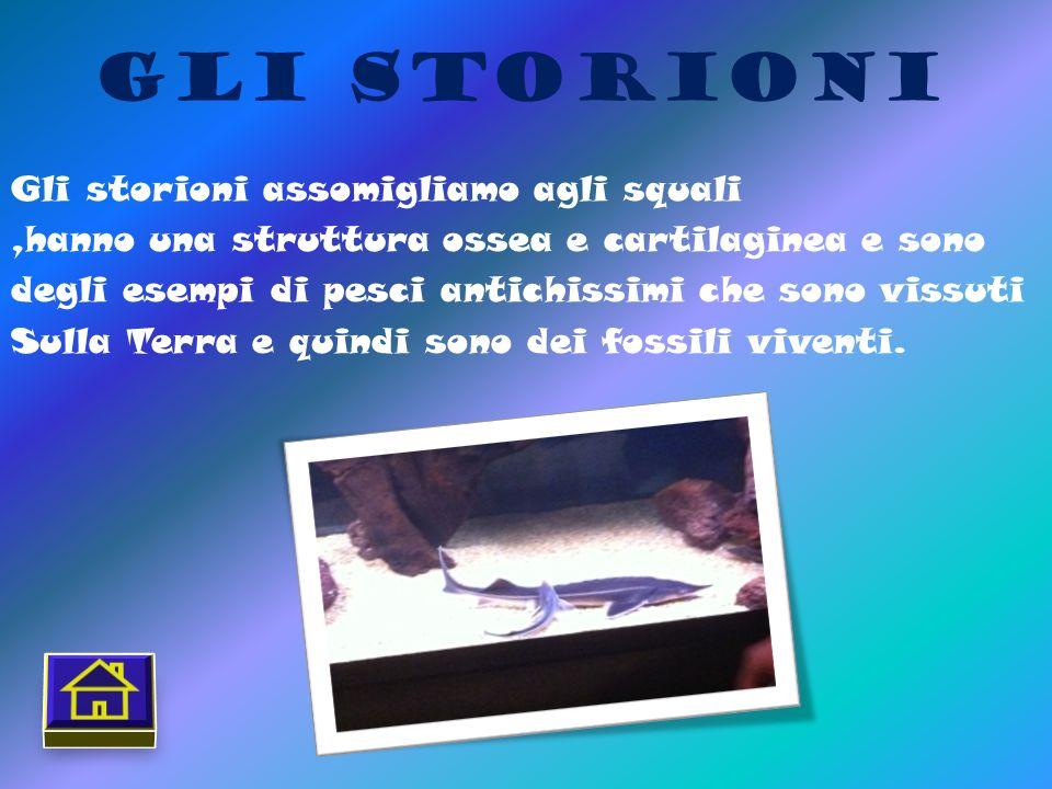 Gli Storioni