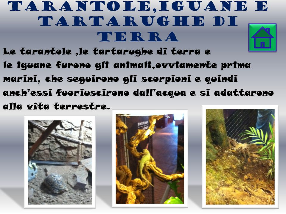 Tarantole,IGUANE E TARTARUGHE di TERRA