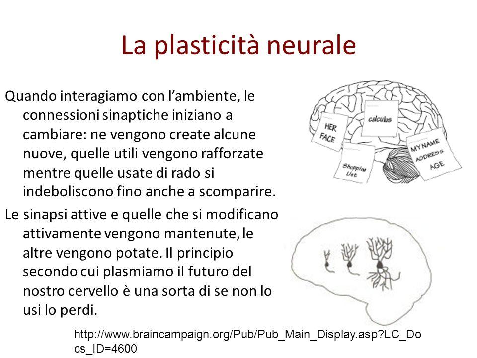 La plasticità neurale
