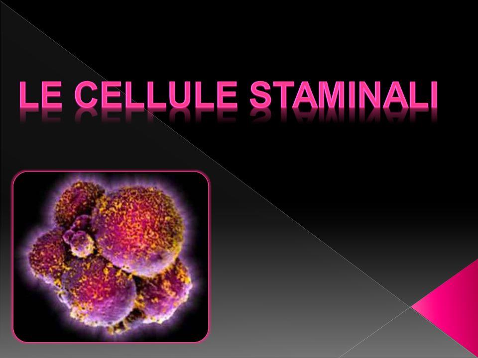 Le cellule staminali