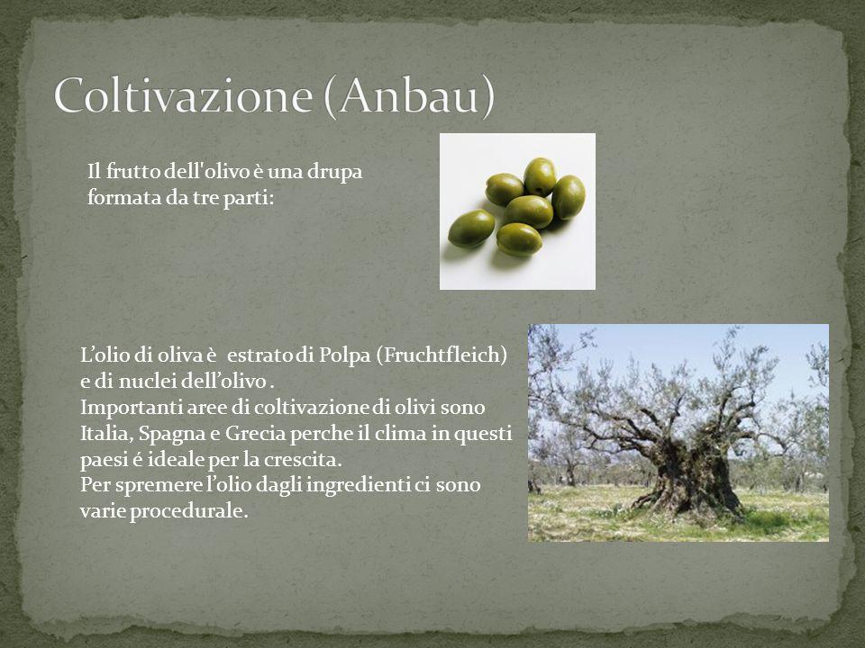 Coltivazione (Anbau) Il frutto dell olivo è una drupa formata da tre parti: