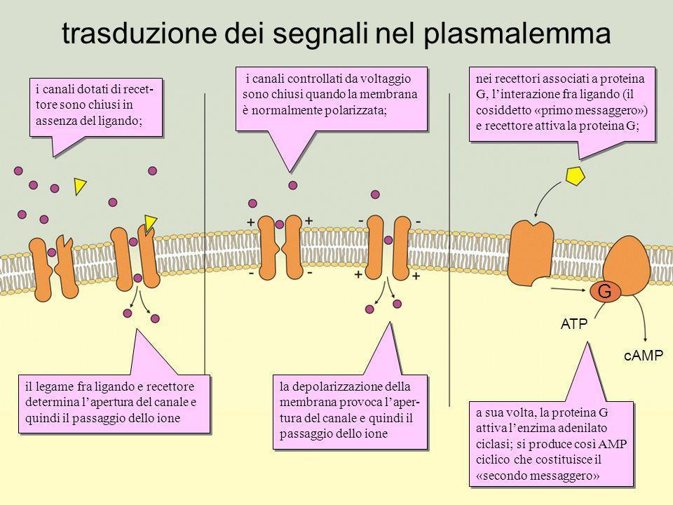 trasduzione dei segnali nel plasmalemma