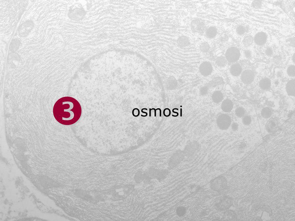  osmosi