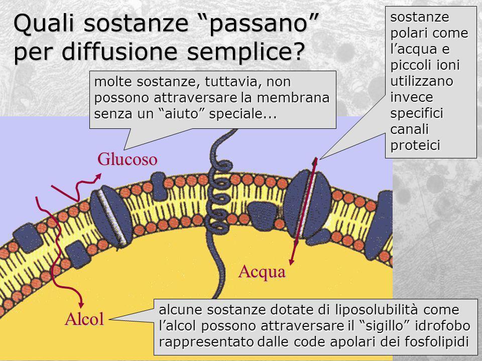 Quali sostanze passano per diffusione semplice