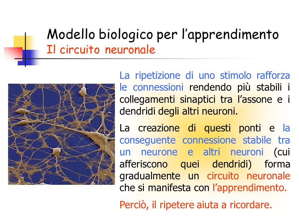Modello biologico per l'apprendimento Il circuito neuronale