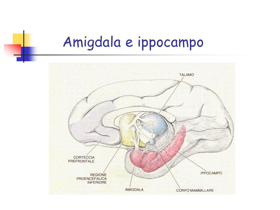 Amigdala e ippocampo