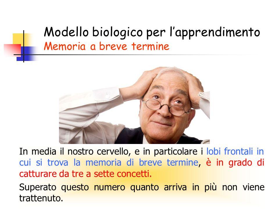 Modello biologico per l'apprendimento Memoria a breve termine