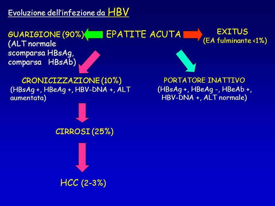 EPATITE ACUTA HCC (2-3%) Evoluzione dell'infezione da HBV EXITUS