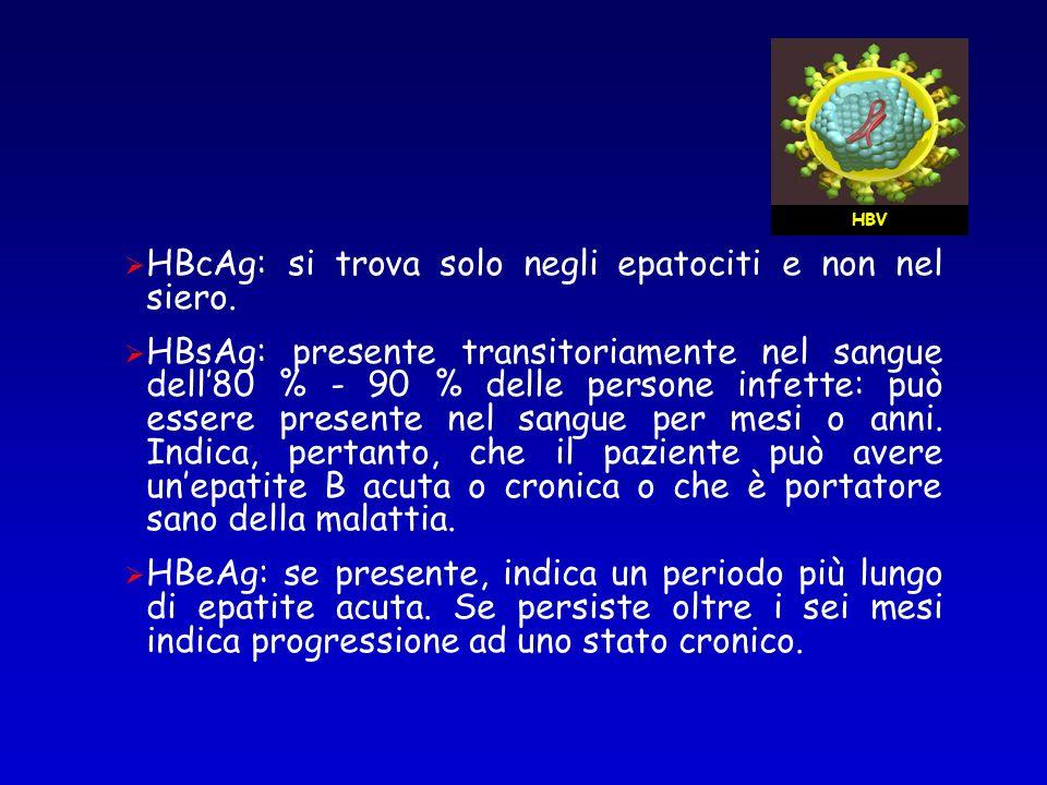 HBcAg: si trova solo negli epatociti e non nel siero.