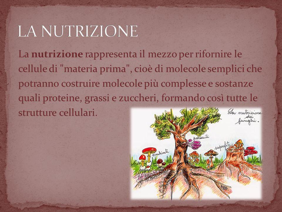 LA NUTRIZIONE La nutrizione rappresenta il mezzo per rifornire le