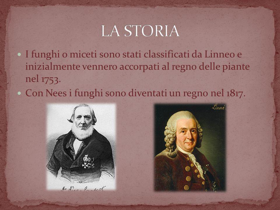 LA STORIA I funghi o miceti sono stati classificati da Linneo e inizialmente vennero accorpati al regno delle piante nel 1753.