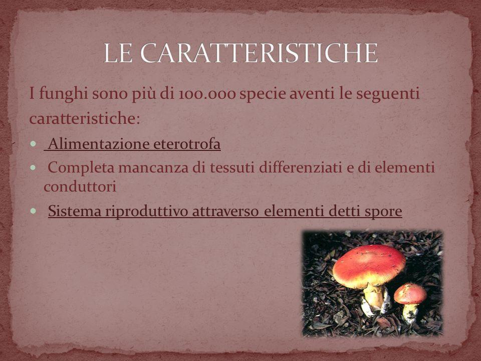 LE CARATTERISTICHE I funghi sono più di 100.000 specie aventi le seguenti. caratteristiche: Alimentazione eterotrofa.