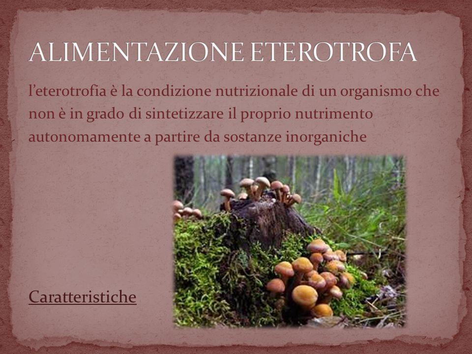 ALIMENTAZIONE ETEROTROFA