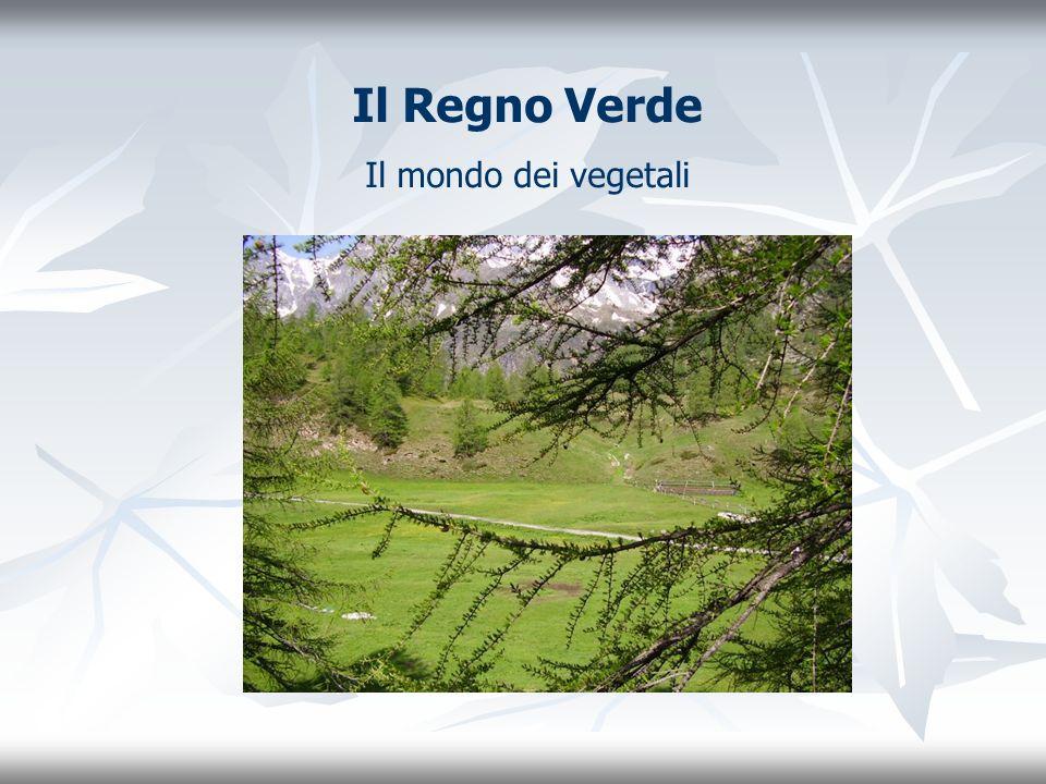 Il Regno Verde Il mondo dei vegetali
