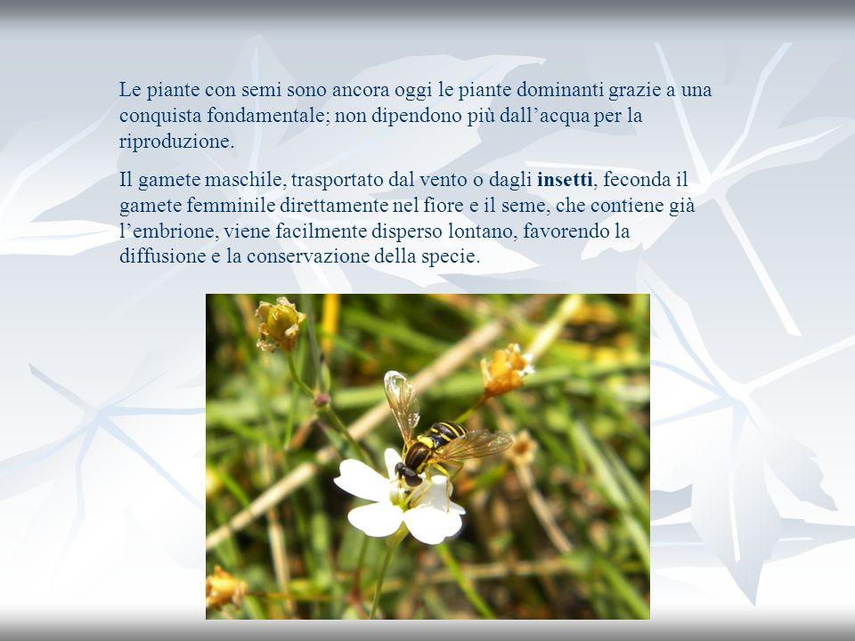 Le piante con semi sono ancora oggi le piante dominanti grazie a una conquista fondamentale; non dipendono più dall'acqua per la riproduzione.