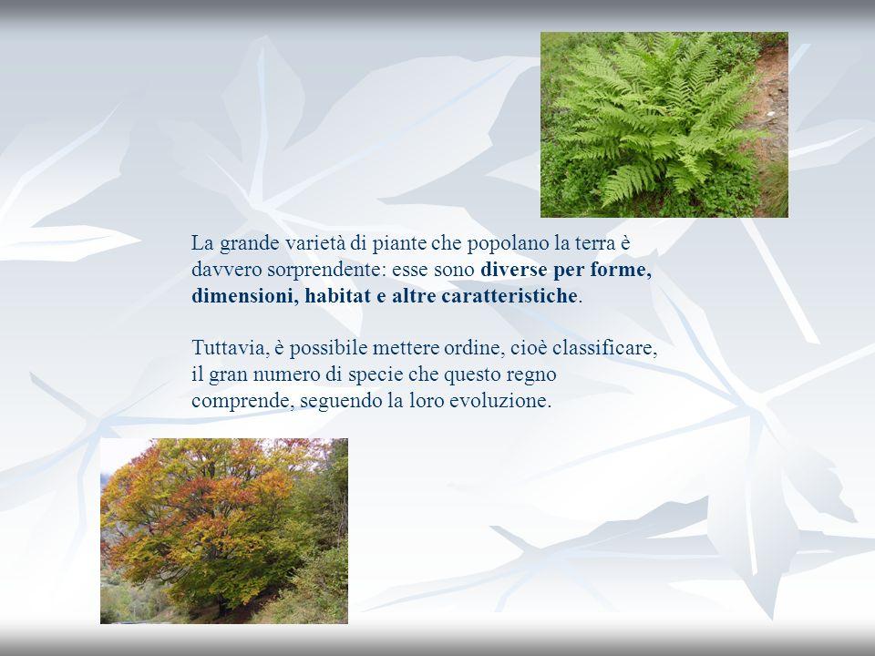La grande varietà di piante che popolano la terra è davvero sorprendente: esse sono diverse per forme, dimensioni, habitat e altre caratteristiche.