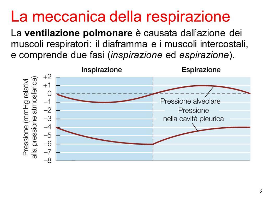La meccanica della respirazione