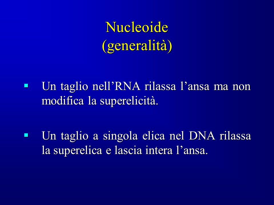 Nucleoide (generalità)