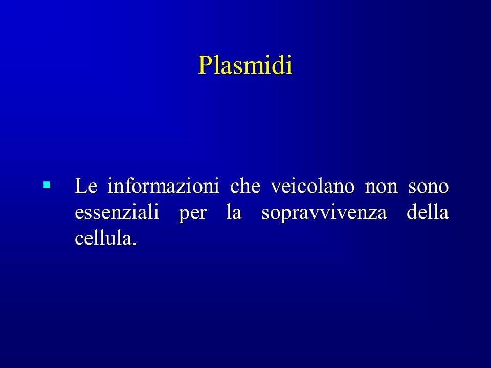 Plasmidi Le informazioni che veicolano non sono essenziali per la sopravvivenza della cellula.