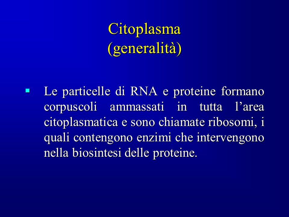 Citoplasma (generalità)