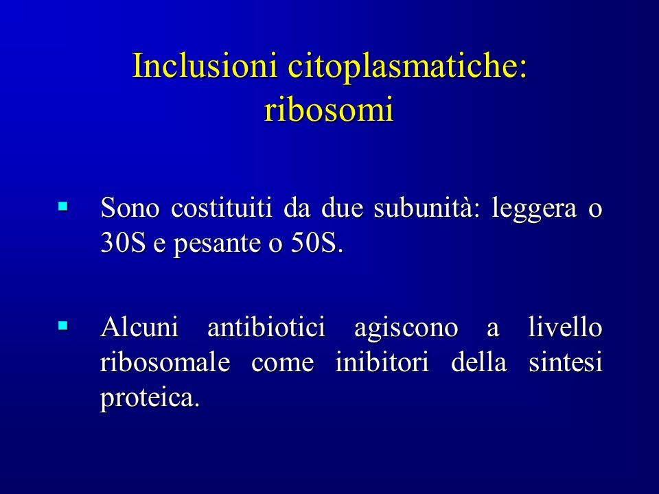 Inclusioni citoplasmatiche: ribosomi
