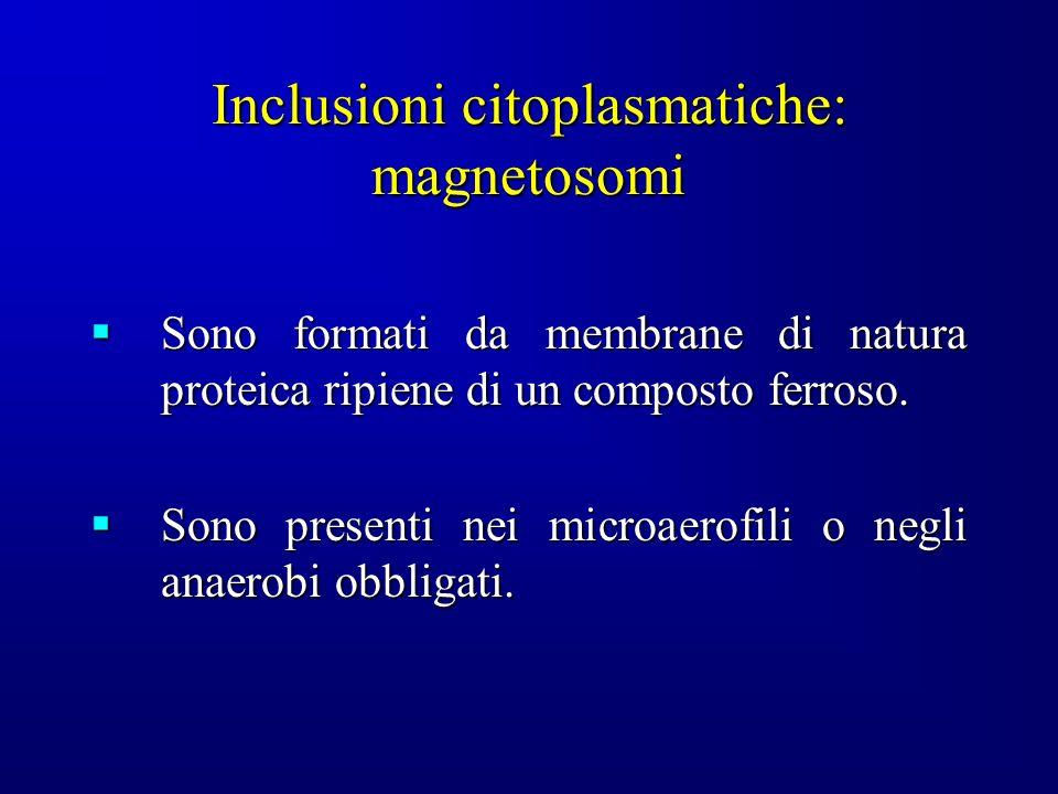 Inclusioni citoplasmatiche: magnetosomi