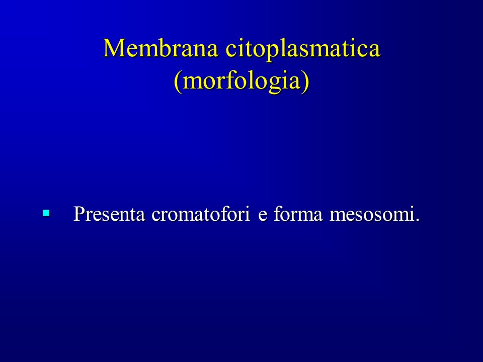 Membrana citoplasmatica (morfologia)