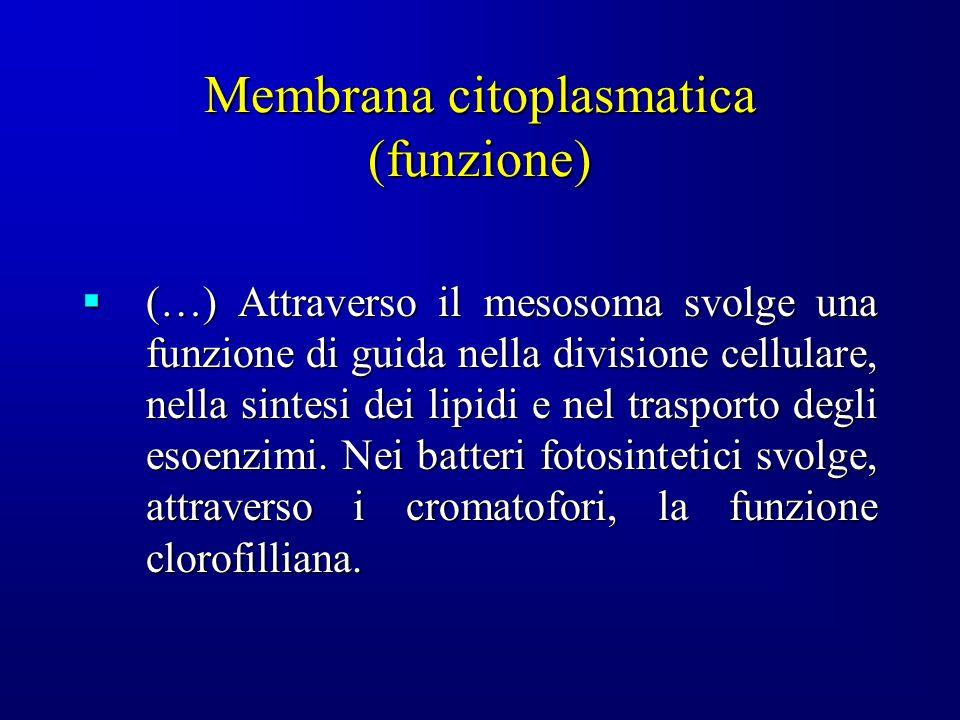Membrana citoplasmatica (funzione)